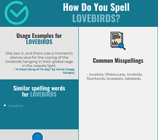 Correct spelling for lovebirds [Infographic] | Spellchecker net