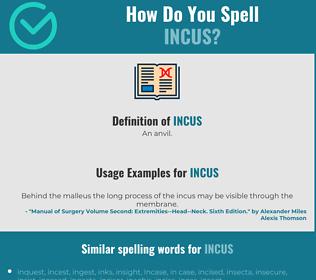 Correct spelling for incus