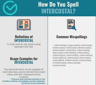 Correct spelling for intercostal