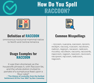 Correct spelling for raccoon