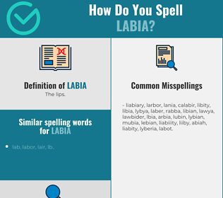Correct spelling for Labia