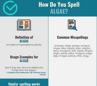 Correct spelling for algae