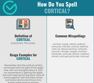 Correct spelling for cortical