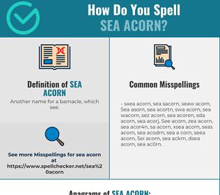 Correct spelling for Sea acorn