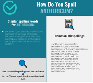 Correct spelling for anthericum