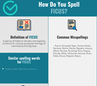 Correct spelling for ficus