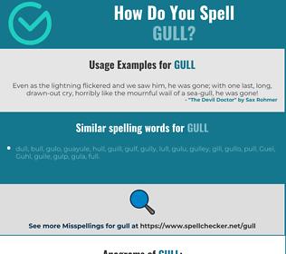 Correct spelling for gull