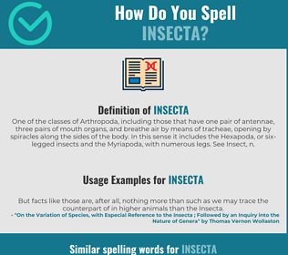 Correct spelling for insecta