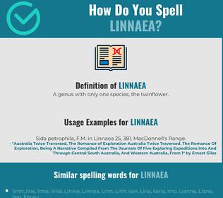 Correct spelling for linnaea