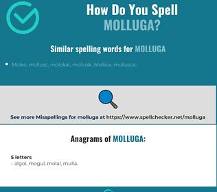 Correct spelling for molluga
