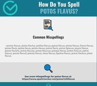 Correct spelling for Potos Flavus