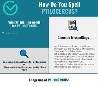 Correct spelling for ptilocercus