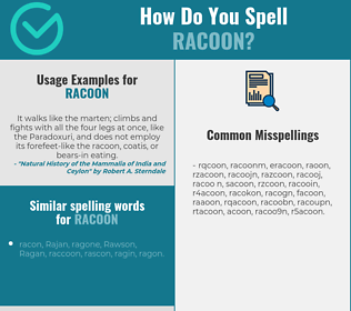 Correct spelling for racoon