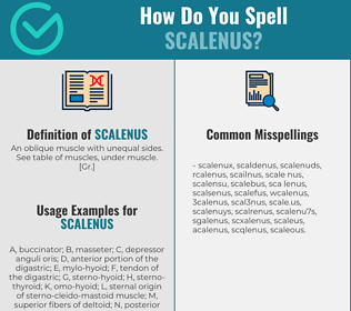 Correct spelling for scalenus