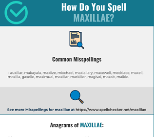 Correct spelling for Maxillae