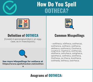 Correct spelling for Ootheca