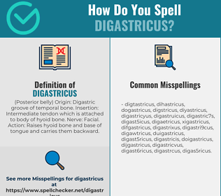 Correct spelling for digastricus