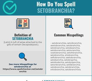 Correct spelling for setobranchia