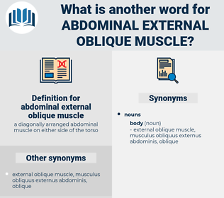 abdominal external oblique muscle, synonym abdominal external oblique muscle, another word for abdominal external oblique muscle, words like abdominal external oblique muscle, thesaurus abdominal external oblique muscle