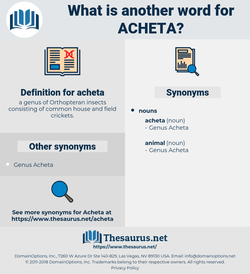 acheta, synonym acheta, another word for acheta, words like acheta, thesaurus acheta