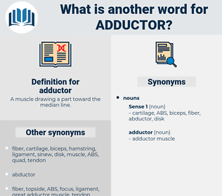 adductor, synonym adductor, another word for adductor, words like adductor, thesaurus adductor