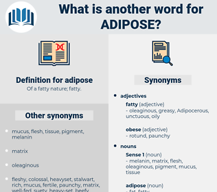 adipose, synonym adipose, another word for adipose, words like adipose, thesaurus adipose