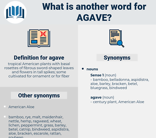 agave, synonym agave, another word for agave, words like agave, thesaurus agave