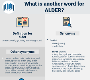 alder, synonym alder, another word for alder, words like alder, thesaurus alder