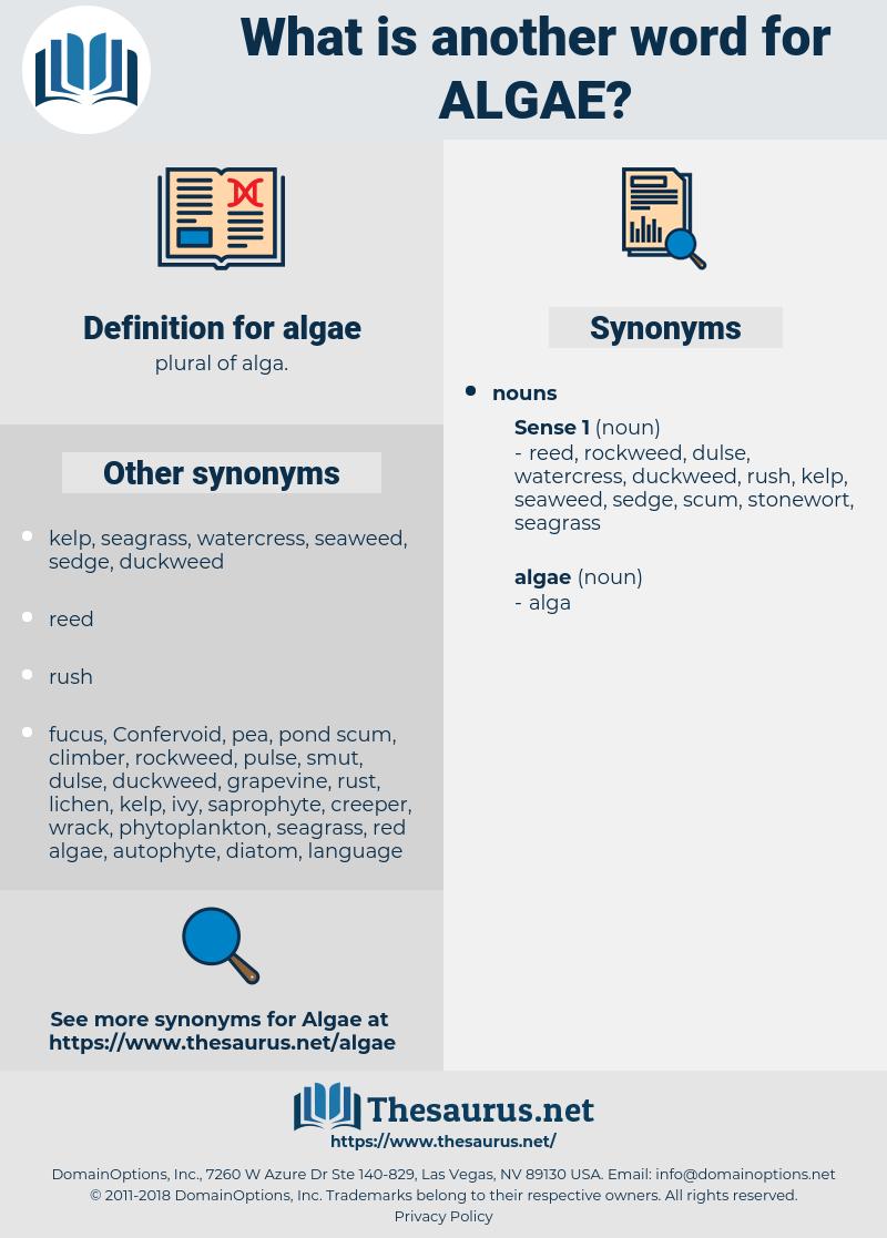 algae, synonym algae, another word for algae, words like algae, thesaurus algae