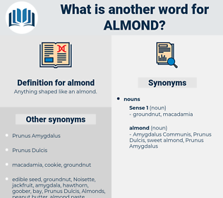 almond, synonym almond, another word for almond, words like almond, thesaurus almond