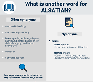 alsatian, synonym alsatian, another word for alsatian, words like alsatian, thesaurus alsatian