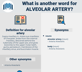 alveolar artery, synonym alveolar artery, another word for alveolar artery, words like alveolar artery, thesaurus alveolar artery