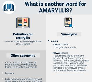 amaryllis, synonym amaryllis, another word for amaryllis, words like amaryllis, thesaurus amaryllis