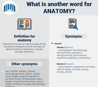 anatomy, synonym anatomy, another word for anatomy, words like anatomy, thesaurus anatomy