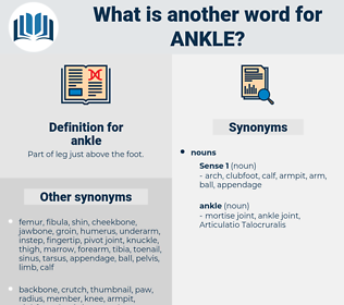 ankle, synonym ankle, another word for ankle, words like ankle, thesaurus ankle