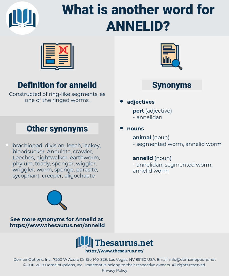 annelid, synonym annelid, another word for annelid, words like annelid, thesaurus annelid