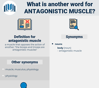 antagonistic muscle, synonym antagonistic muscle, another word for antagonistic muscle, words like antagonistic muscle, thesaurus antagonistic muscle