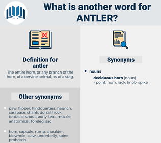 antler, synonym antler, another word for antler, words like antler, thesaurus antler