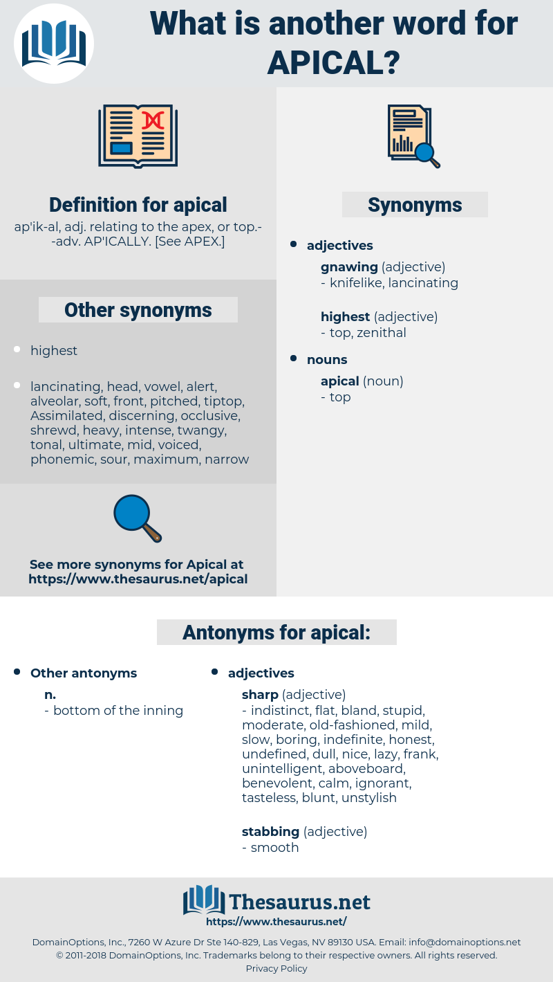 apical, synonym apical, another word for apical, words like apical, thesaurus apical