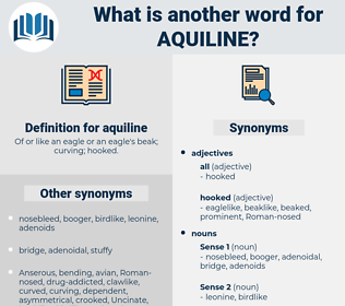 aquiline, synonym aquiline, another word for aquiline, words like aquiline, thesaurus aquiline