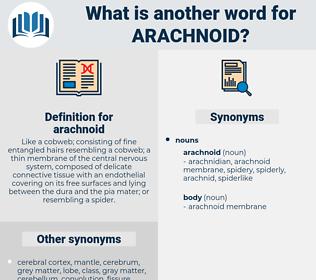 arachnoid, synonym arachnoid, another word for arachnoid, words like arachnoid, thesaurus arachnoid
