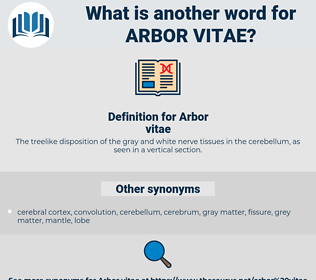 Arbor vitae, synonym Arbor vitae, another word for Arbor vitae, words like Arbor vitae, thesaurus Arbor vitae