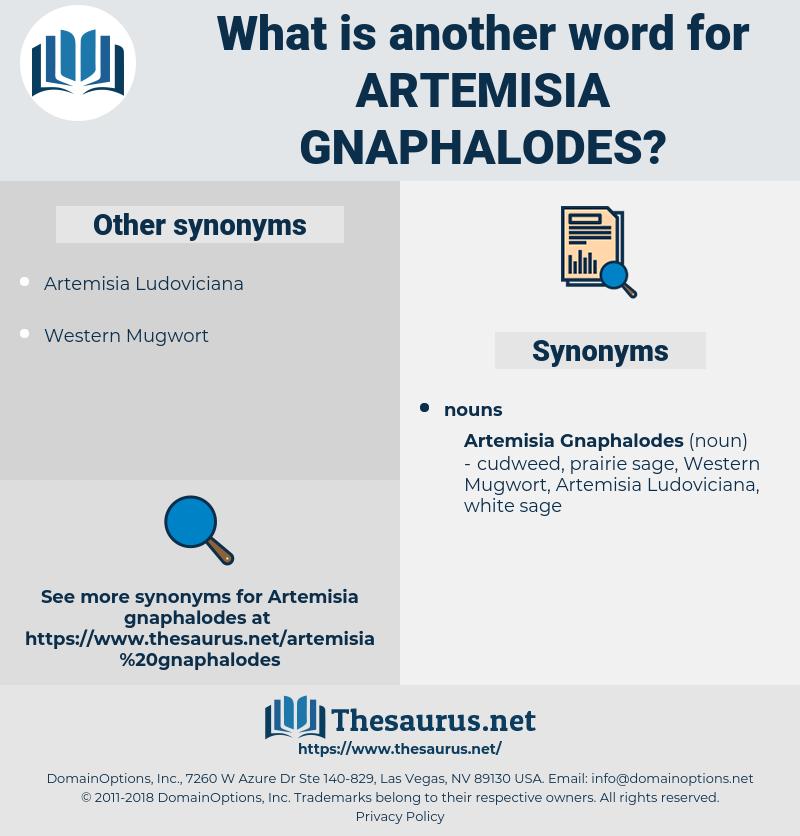 Artemisia Gnaphalodes, synonym Artemisia Gnaphalodes, another word for Artemisia Gnaphalodes, words like Artemisia Gnaphalodes, thesaurus Artemisia Gnaphalodes