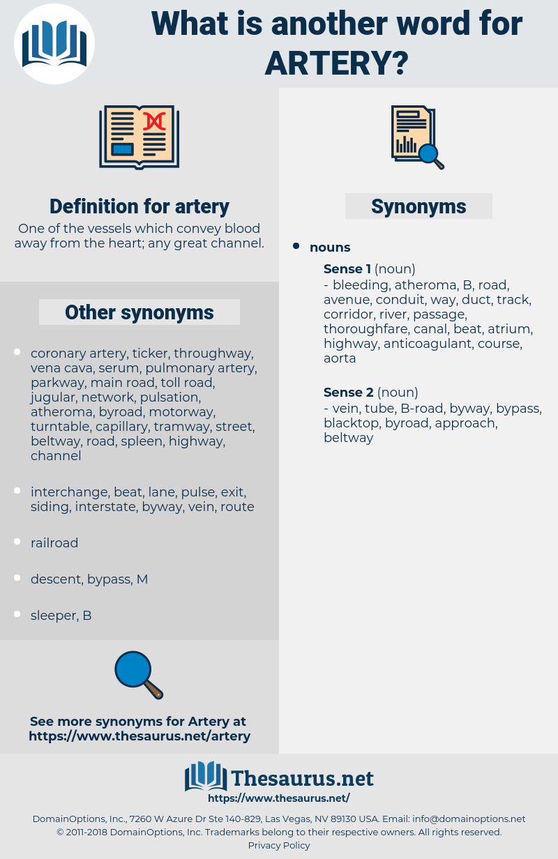 artery, synonym artery, another word for artery, words like artery, thesaurus artery