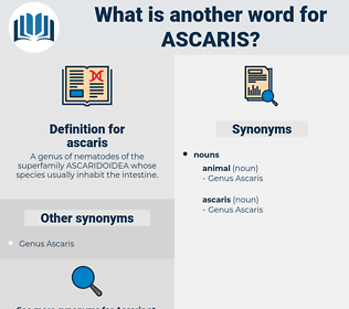 ascaris, synonym ascaris, another word for ascaris, words like ascaris, thesaurus ascaris