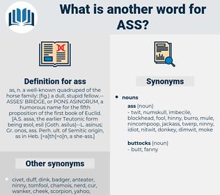 ass, synonym ass, another word for ass, words like ass, thesaurus ass
