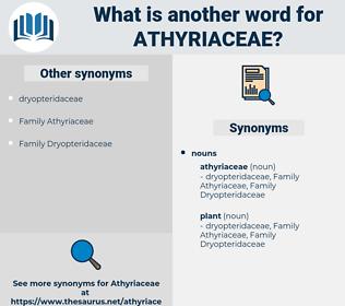 athyriaceae, synonym athyriaceae, another word for athyriaceae, words like athyriaceae, thesaurus athyriaceae