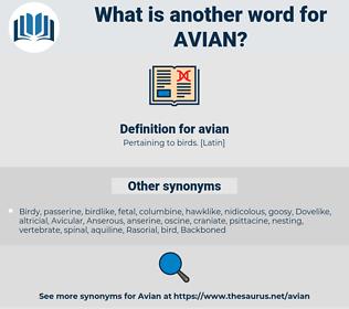 avian, synonym avian, another word for avian, words like avian, thesaurus avian