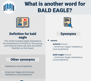 bald eagle, synonym bald eagle, another word for bald eagle, words like bald eagle, thesaurus bald eagle
