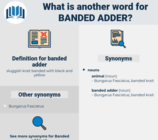 banded adder, synonym banded adder, another word for banded adder, words like banded adder, thesaurus banded adder